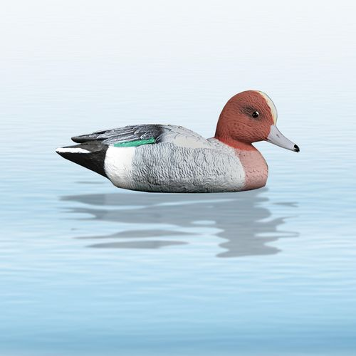 EU. WIDGEON drake